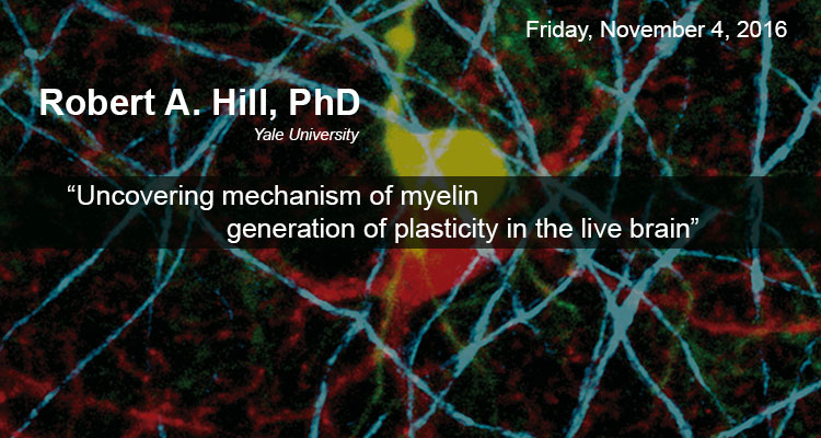 MSN Seminar – Uncovering mechanisms of myelin generation and plasticity in the live brain