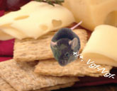 Mouse sitting atop crackers with cheese on both sides