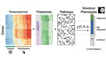 Example of using Harmonizome to create tables that describe functions and attributes of various genes to predict mouse phenotypes associated with specific knockouts