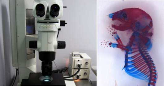 Olympus stereo microscope