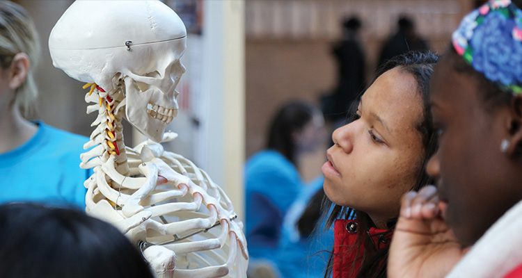 Image of girl looking at human skeleton