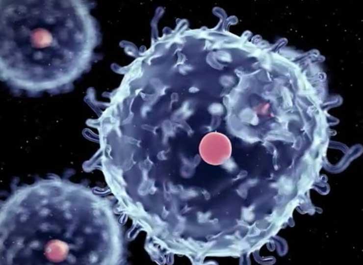 The Promise of Stem Cells to Cure Disease