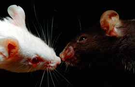 Silencing Select Brain Cells Triggers Social Deficits in Mice